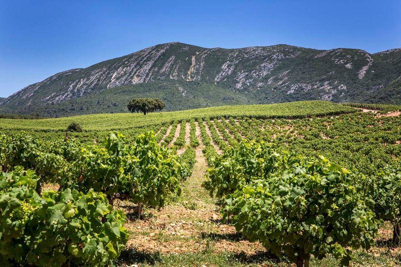 Осень 2020 в Лиссабоне: виноградник