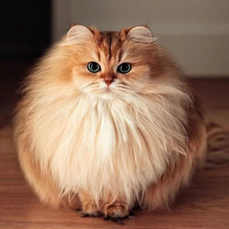 Из-за чего питание сухим кормом может привести к лишнему весу и болезням у кошек?