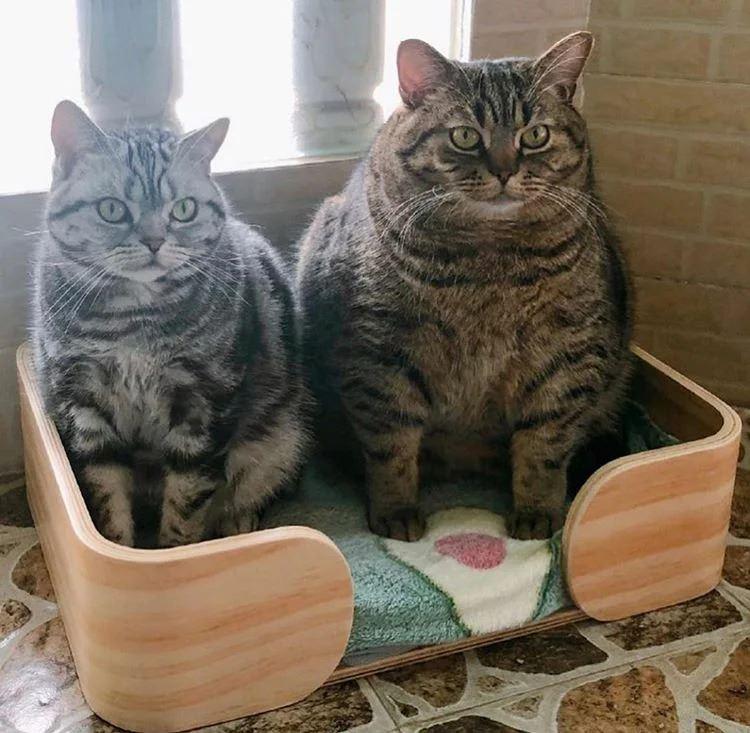 Как питание сухим кормом может привести к лишнему весу и болезням у кошек?