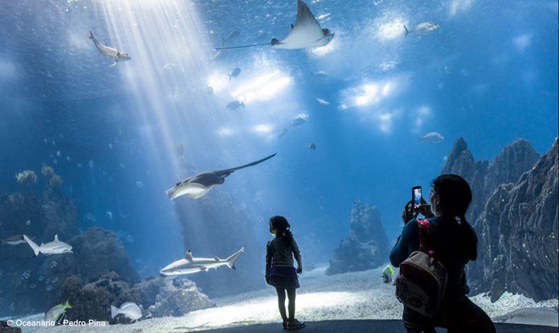 В Лиссабон с детьми: куда сходить всей семьей - Лиссабонский океанариум