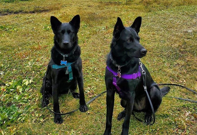 Реже берут и чаще усыпляют: что такое «синдром чёрной собаки» и почему люди не любят «чернышей»