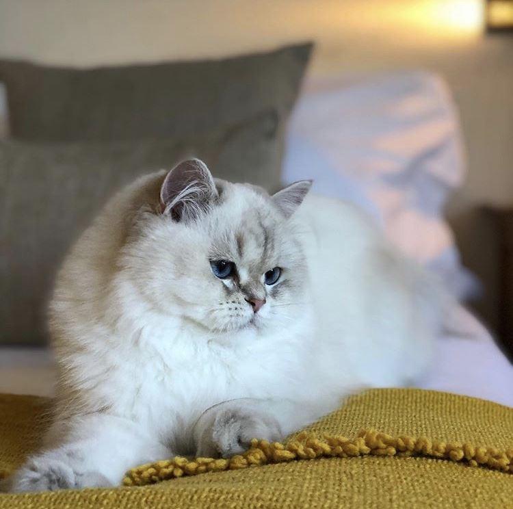 как заботятся о питомцах в пятизвёздочных отелях Швейцарии - кошка