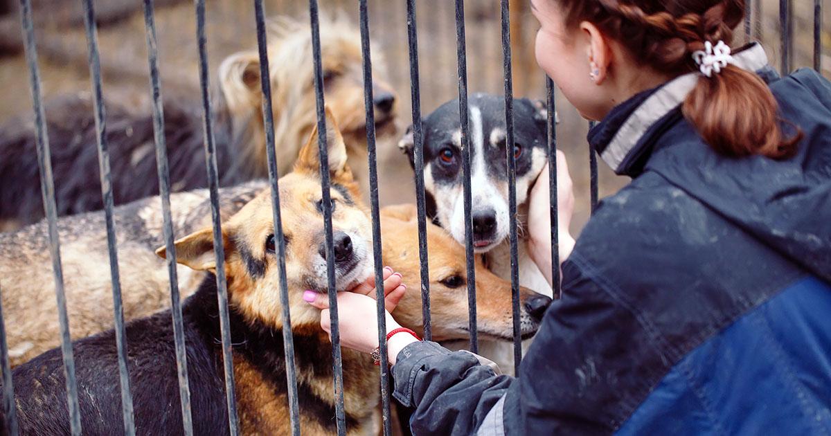 «Нам бы покрасивше!»: 10 типов собак, которых не спешат забирать из приютов