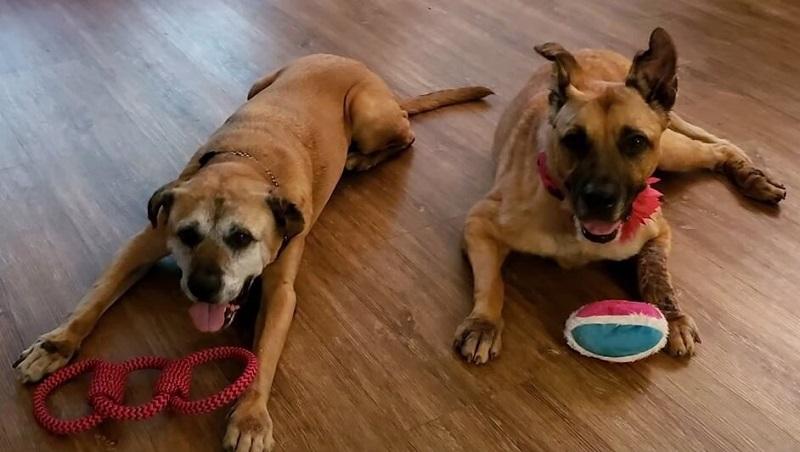Старые некрасивые собаки приюта - Брутус и Сэм