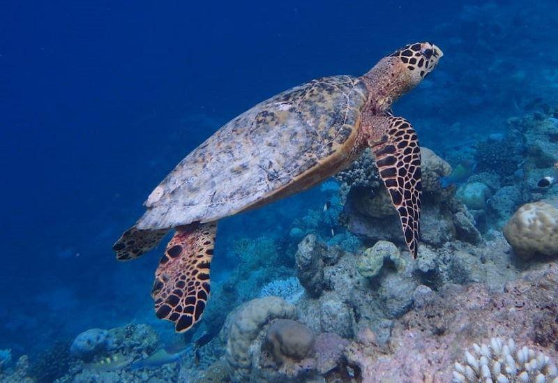 Мальдивский отель предлагает гостям «усыновить» кораллы
