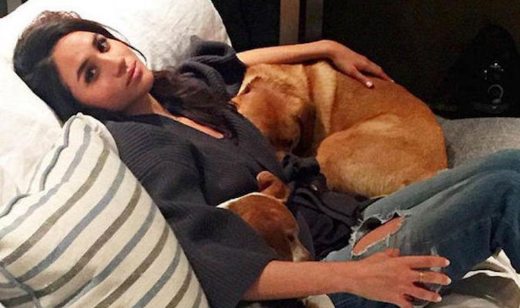 Почему Меган Маркл не забрала с собой любимую собаку, когда стала герцогиней
