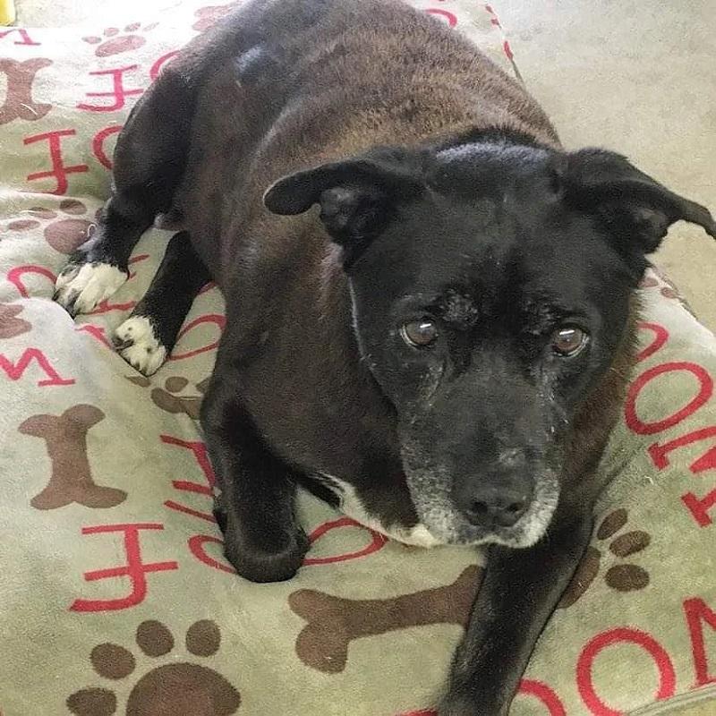 14-летняя собака обрела семью после 11 лет в приюте - Вигглз
