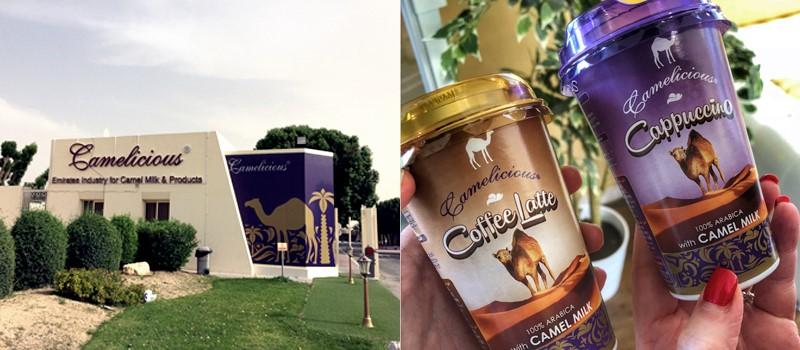 Эко-фермы и рынки Дубая - Молочная ферма Camelicious