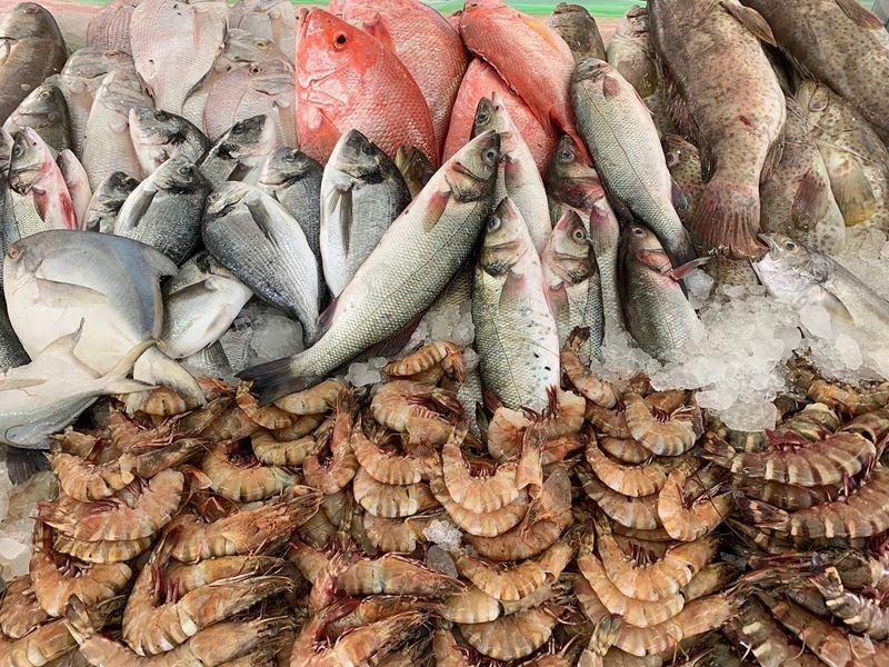 Эко-фермы и рынки Дубая - Рыбный рынок Джумейра