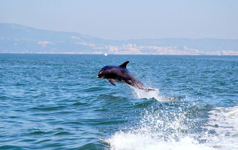 Серфинг и водные активности в Лиссабоне - дельфин