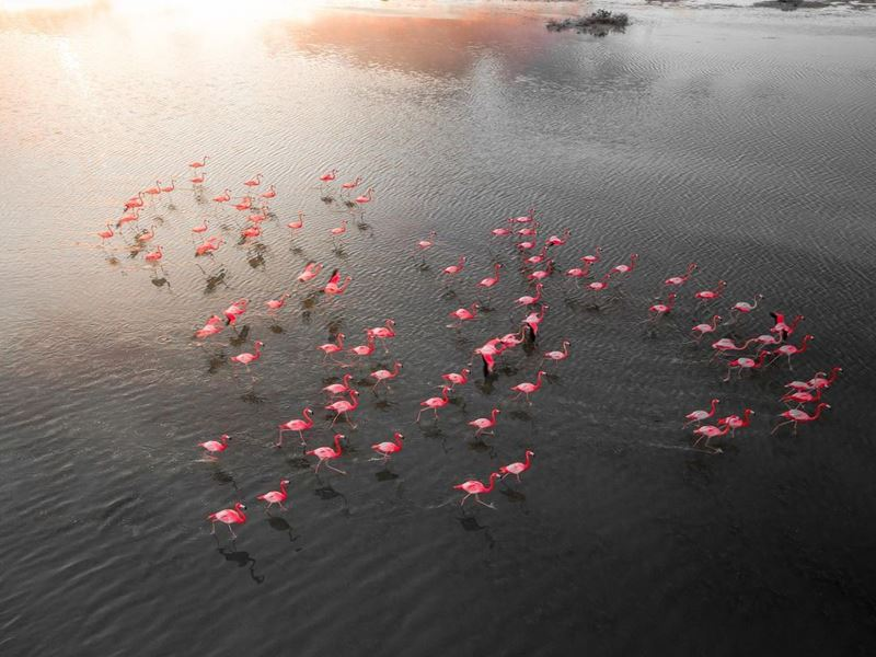 Природные парки и заповедники Лиссабона - заповедник устья реки Тежу