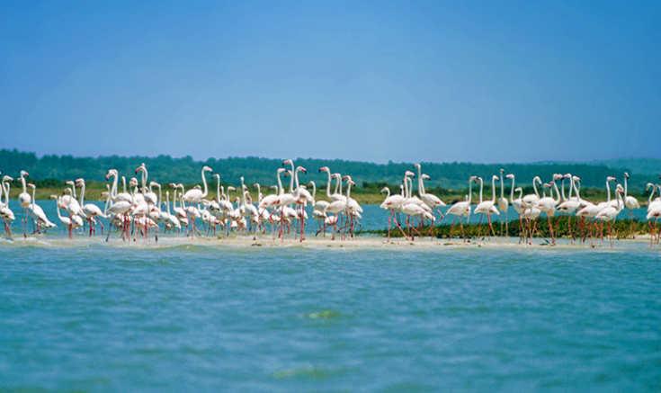 Природные парки и заповедники Лиссабона - заповедник Устья Садо