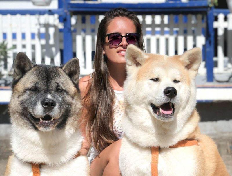 Неудобные собаки породы-отказники - акита