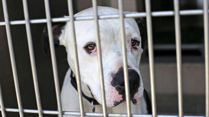 Неудобные собаки: топ-10 пород, от которых часто отказываются россияне