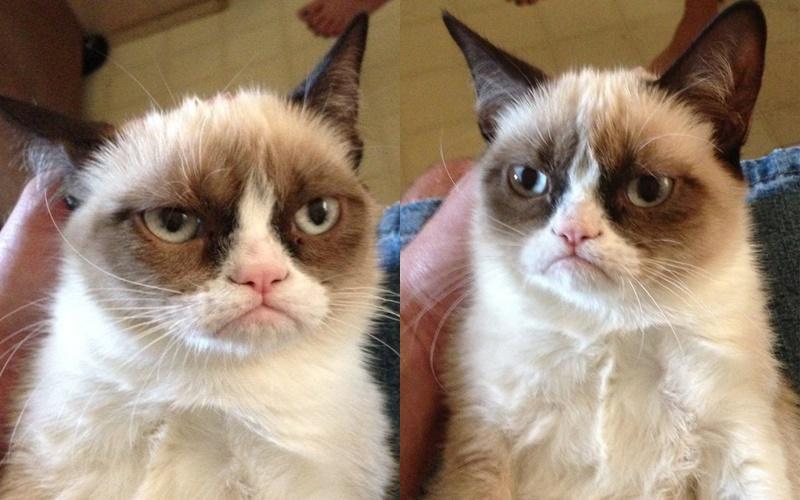10 фактов о «сердитой кошке» Grumpy Cat - мем года