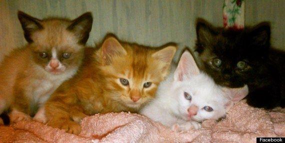 10 фактов о «сердитой кошке» Grumpy Cat - Тард и другие котята из этого помёта
