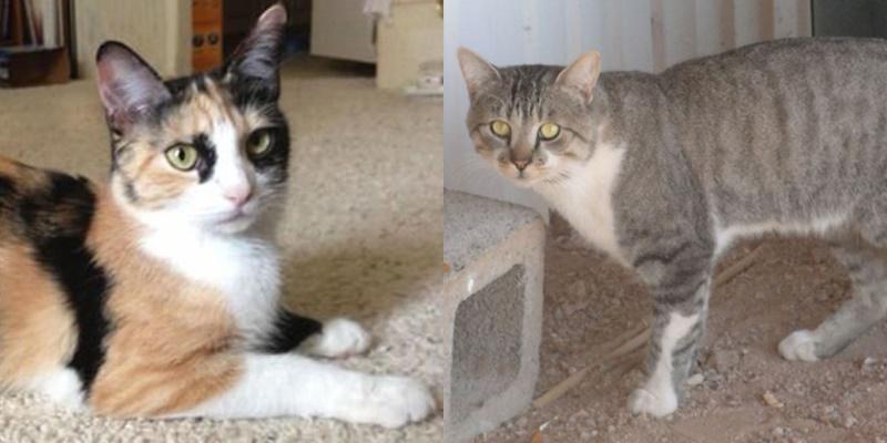 10 фактов о «сердитой кошке» Grumpy Cat - мама и папа Тард