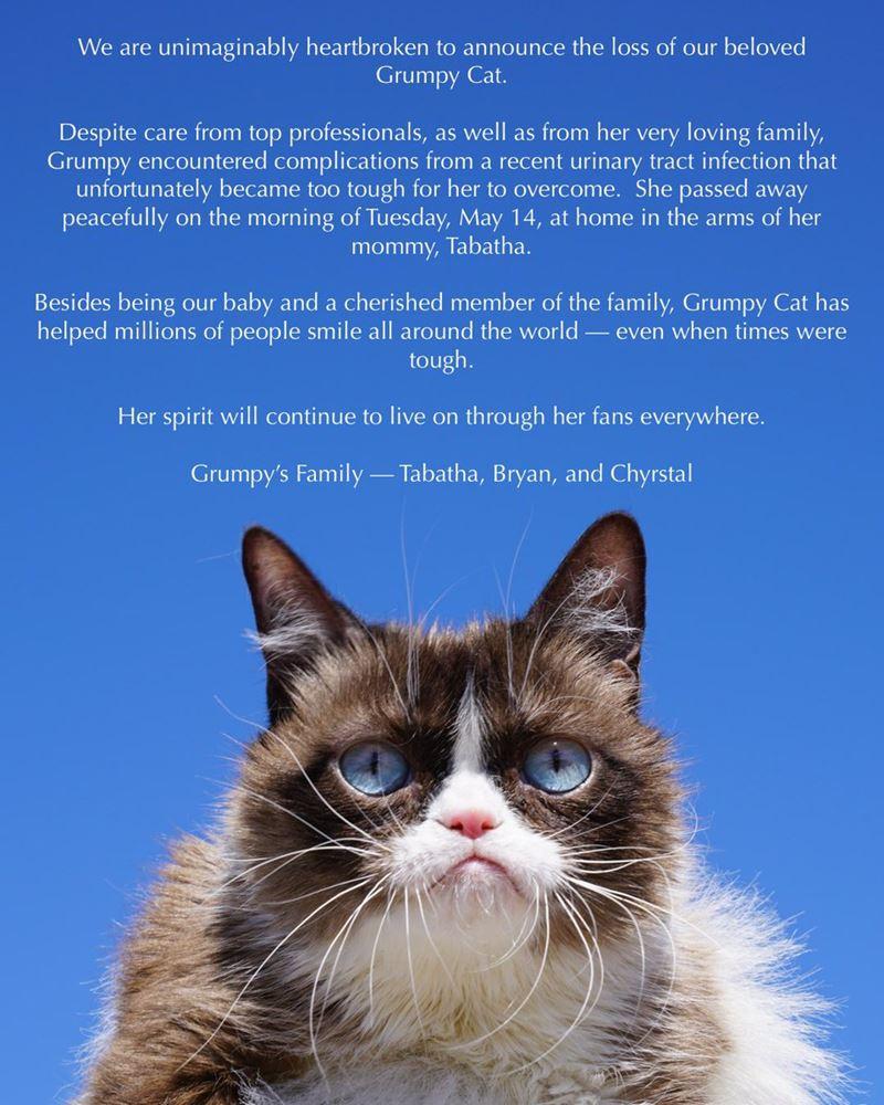 10 фактов о «сердитой кошке» Grumpy Cat - Сообщение о cмеpти в соцсетях