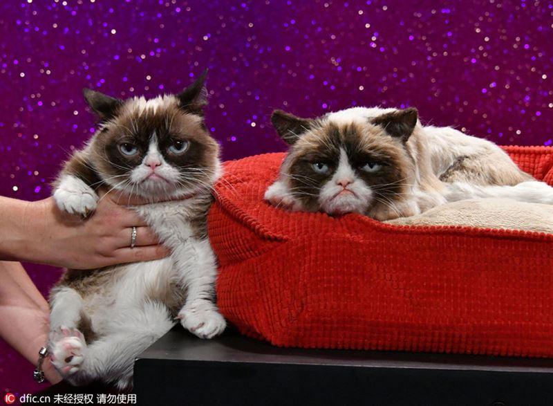 10 фактов о «сердитой кошке» Grumpy Cat - Тард в Музее мадам Тюссо