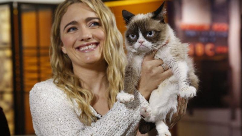 10 фактов о «сердитой кошке» Grumpy Cat - Тард с хозяйкой Табатой