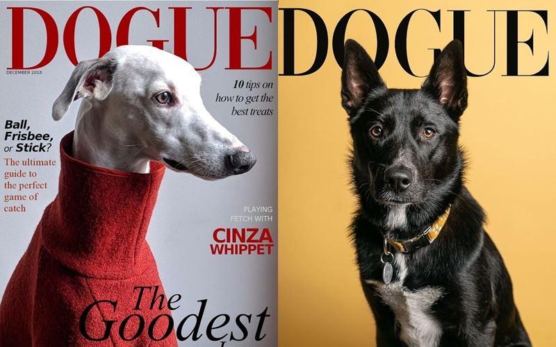 Собаки вместо моделей на обложке Dogue - уиппет и овчарка
