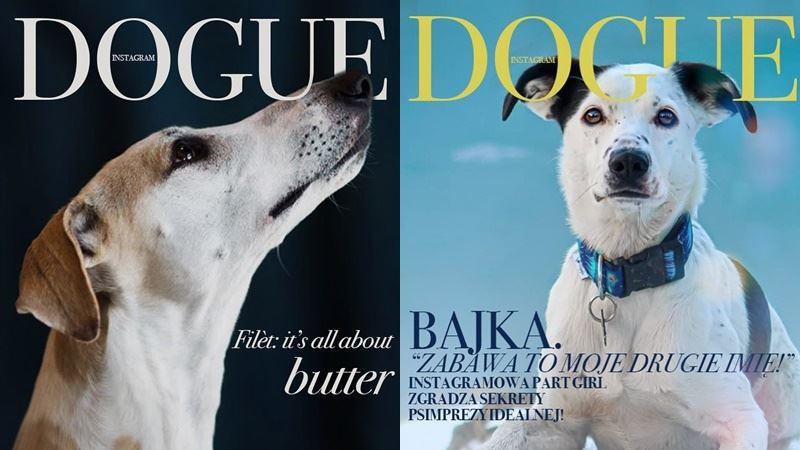 Собаки вместо моделей на обложке Dogue - уиппет и метис