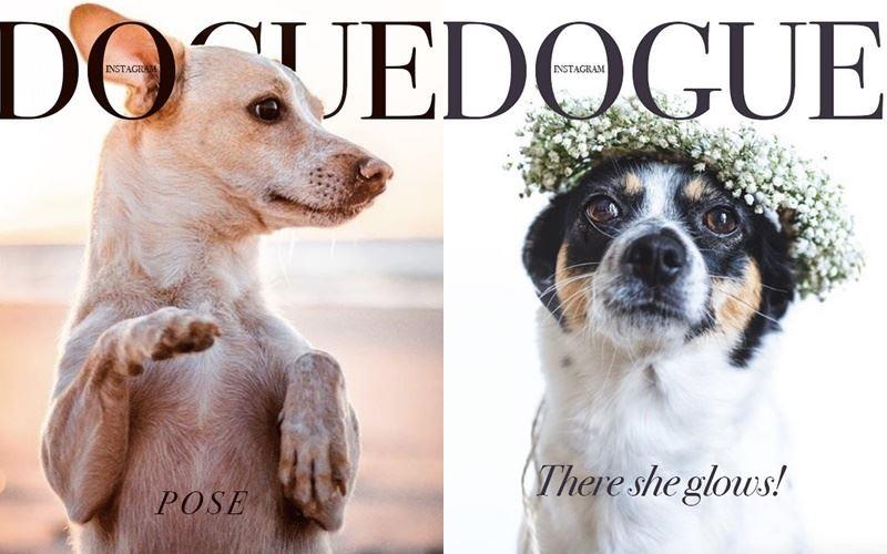 Собаки вместо моделей на обложке Dogue - дворняги