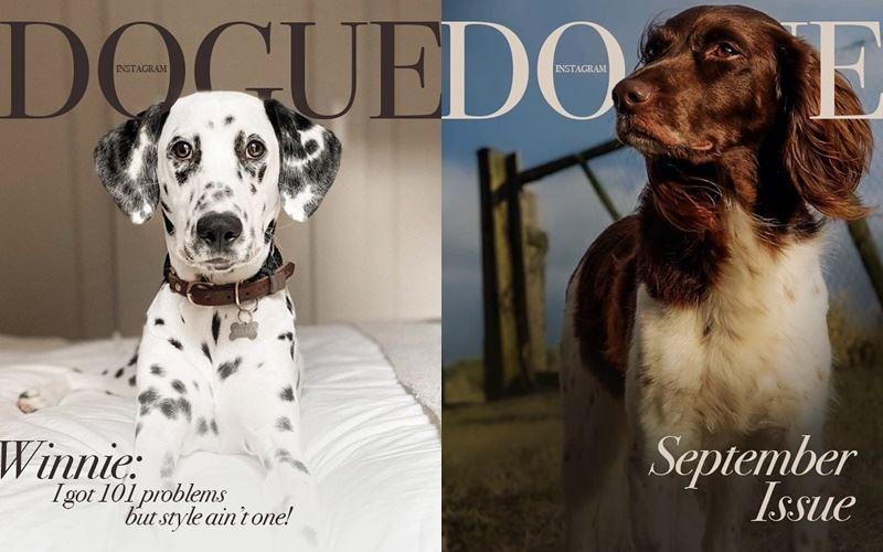 Собаки вместо моделей на обложке Dogue - далматин и спаниель