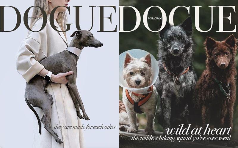 Собаки вместо моделей на обложке Dogue - левретки и шипперке