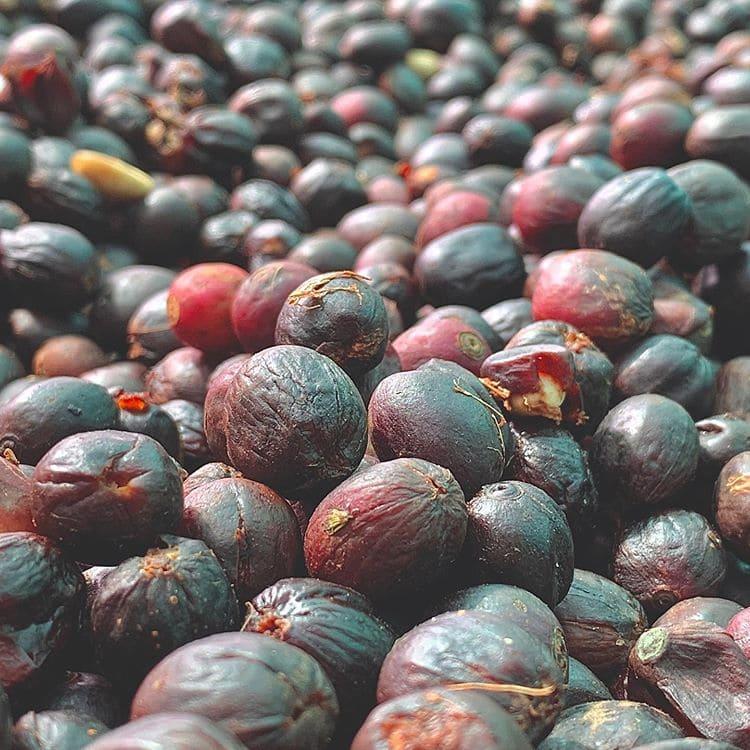 Происхождение и история кофе: просушивание кофейных зёрен