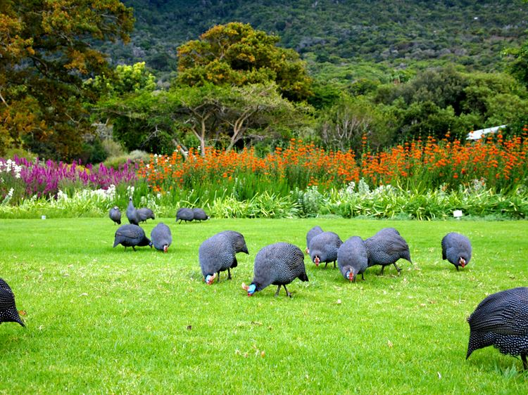 Самые красивые парки и сады мира: ботанический сад Кирстенбош в Африке