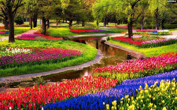 Самые красивые сады и парки: Парк Кёкенхоф в Нидерландах