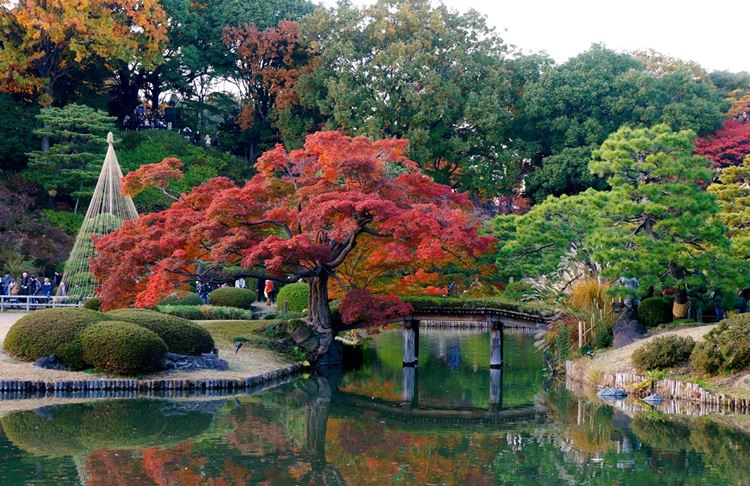 Самые красивые сады и парки мира: сад Рикугиэн в Японии
