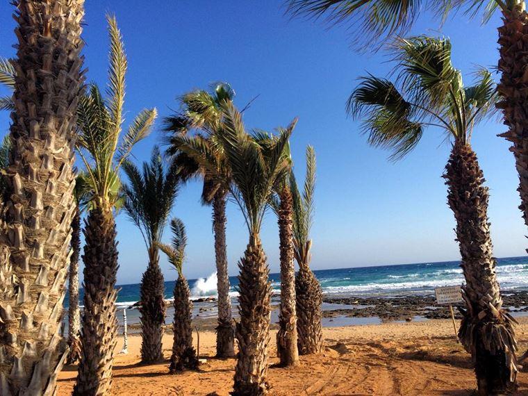 Лучшие пляжи Кипра: пляж Кермия с высокими пальмами