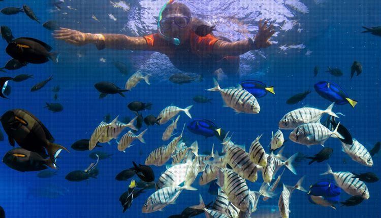 Аквапарки Турции - Sealanya Dolphinpark Seapark (Анталья)