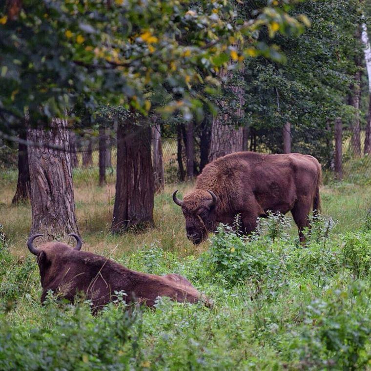 Экологические маршруты России: Приокско-Террасный заповедник