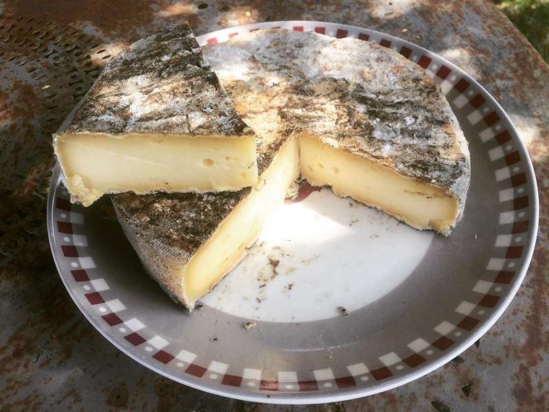 Сорта французского сыра - Сен-Нектер, полумягкий с серой плесенью
