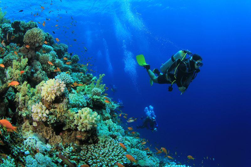 Мальчишник на Мальдивах с Shangri-La`s Villingili Resort & Spa - увлекательный дайвинг
