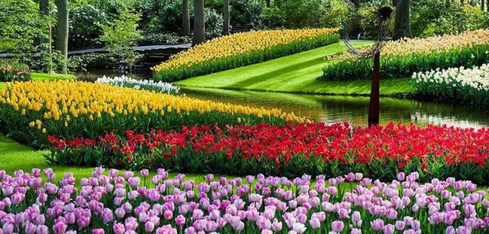 Парк цветов Кёкенхоф в Нидерландах в 2018 году
