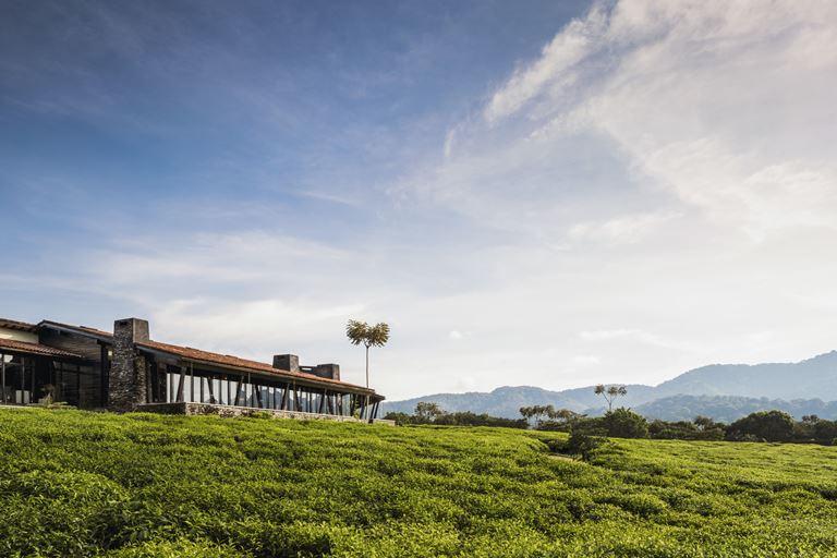 Открытие курорта One&Only Nyungwe House в Руанде - природа