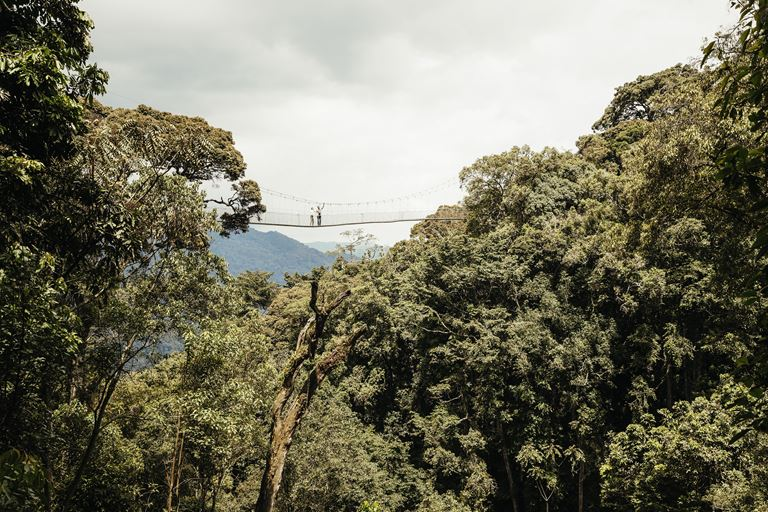 Приключения в дикой природе на курорте One&Only Nyungwe House в Руанде - фото 1
