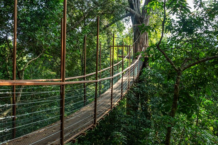 Курорт The Datai Langkawi (остров Лангкави, Малайзия) - Canopy Walk