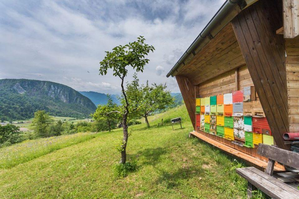 Апитуризм в Словении: идеальный маршрут на 4 дня