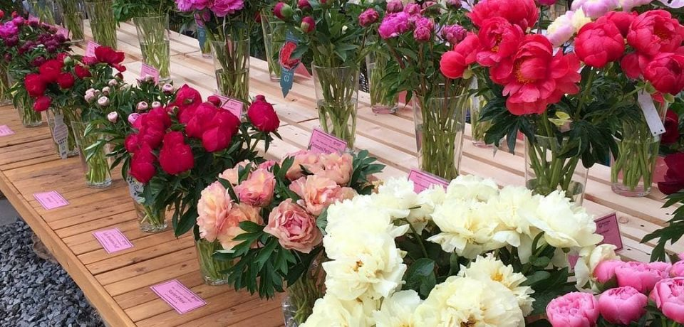 «Месяц пионов и ирисов» в «Аптекарском огороде» (Москва)
