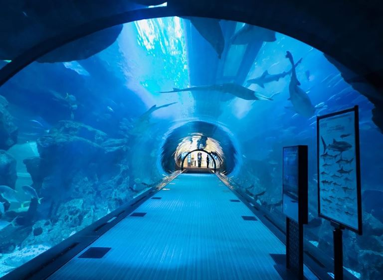 красивые места в Дубае для ярких и необычных фотографий - Дубайский аквариум и подводный зоопарк