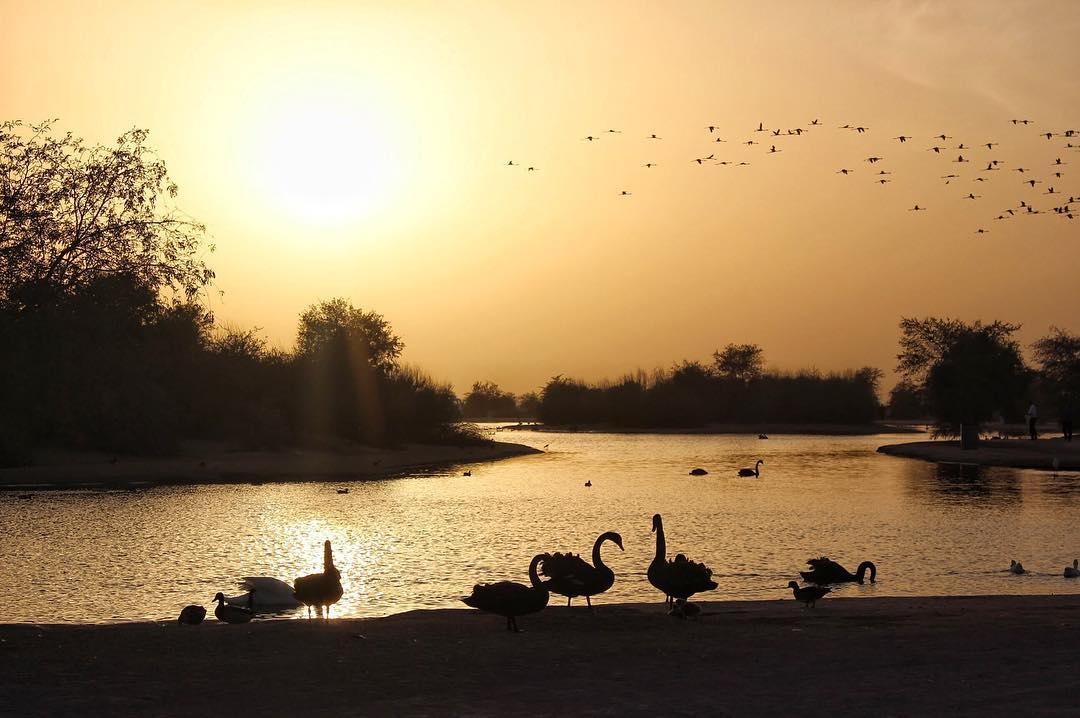 Insta-места: где делать фото красивых закатов в Дубае – Заповедник Аль-Мармум