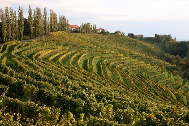 Балканское гастрономическое путешествие: кулинарные традиции и фестивали Словении - фото 2