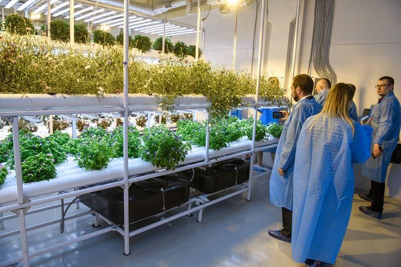 Агрохолдинг «Московский» поделился секретами выращивания зелени для ресторанов